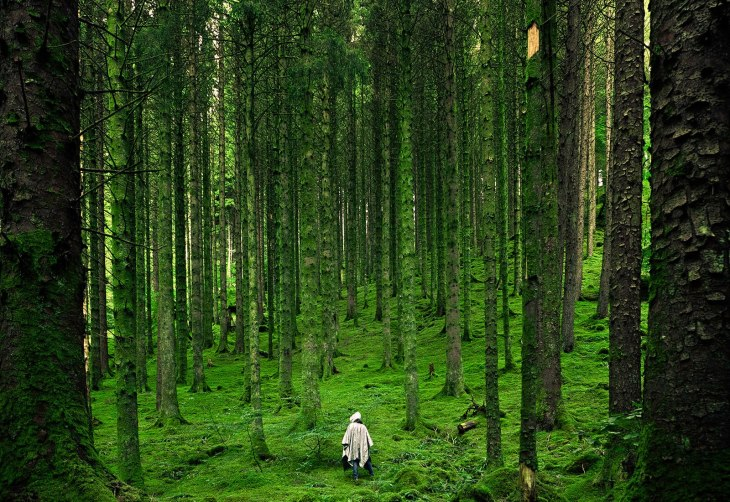 132242-forest-picture-scotland-national-geographic-photo-of