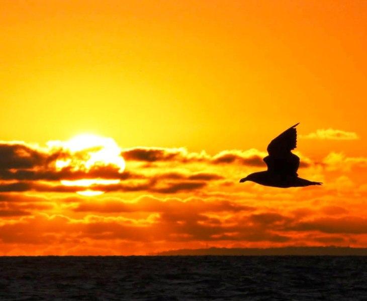 sunset-bird